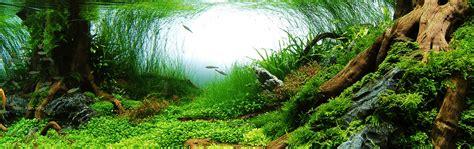 aquarium eau douce plante