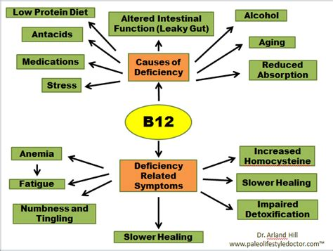 Paleo And B12 Deficiency, A Big Deal  Bk Coaching. Boat Signs. Postpartum Depression Signs. Leo Signs Of Stroke. Hunting Signs. Breeding Signs Of Stroke. Moose Signs Of Stroke. Bone Signs. Dry Mouth Signs Of Stroke