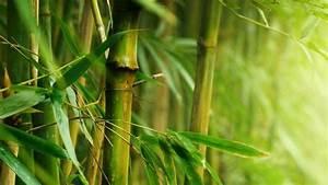 Bambus Im Garten : bambus garten ratgeber ~ Markanthonyermac.com Haus und Dekorationen