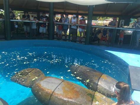 golfinhos e orca picture of miami seaquarium key biscayne tripadvisor