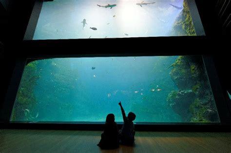 aquarium de lyon activit 233 pour enfant la mulati 232 re 69350 adresse horaire et avis