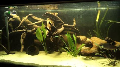 464 liter s 252 damerika und asien aquarium update 2