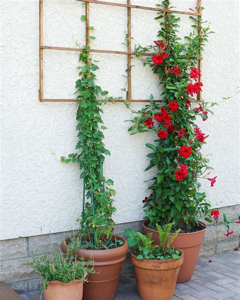 Build A Modern Grid Trellis From Garden Stakes Francois