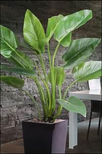 Große Zimmerpflanzen Günstig : wir bieten ihnen eine gro e auswahl an k nstlichen pflanzen in unserem onlineshop zu g nstigen ~ Markanthonyermac.com Haus und Dekorationen