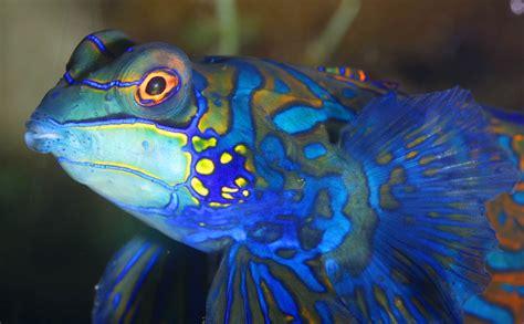 aquarium de la rochelle quai louis prunier 17002 la rochelle informations news avis