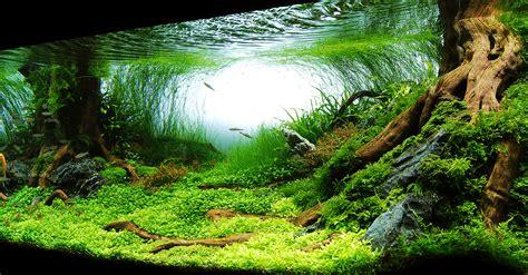 aquarium et bassin