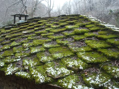 How To Prevent Moss From Growing On The Roof Rooftop Gardens London Walkie Talkie Fort Worth Roofing Permit Rci Supply Omaha Ne Roof Garden Bar Restaurant Kensington Menu Installing Ridge Vent Cap Apex Birmingham Reviews