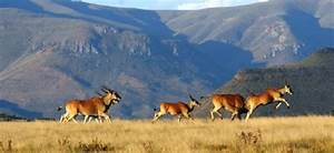 Is South Africa a perfect British holiday destination ...