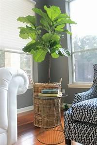 Pflanzen Für Wohnzimmer : eine pflanze als dekoration geigen feige f r eine belebte atmosph re ~ Markanthonyermac.com Haus und Dekorationen