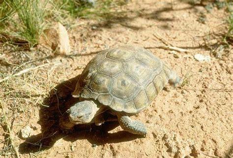 tortues tortue terrestre tortue margin 233 e autres ainsi que marines