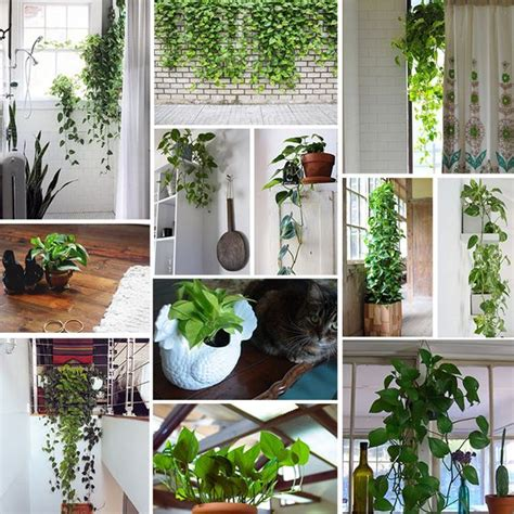 meet the pothos the plant high windows and window