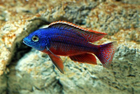 pics of tropical fish freshwater fish for aquarium fresh saltwater fish the abyss