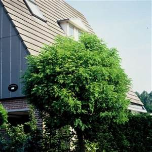 Kleine Bäume Für Den Garten : der baum zum haus garten pflanzen news green24 hilfe pflege bilder ~ Markanthonyermac.com Haus und Dekorationen