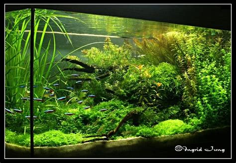 tropical fish tank maintenance live plants 2017 fish tank maintenance