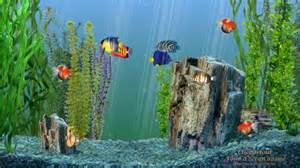 fond 233 cran anim 233 aquarium clicpartout fond d 233 cran anim 233