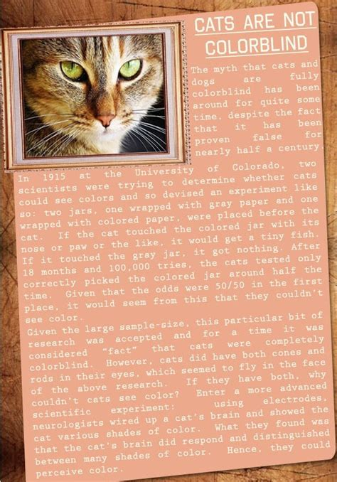are cats color blind are cats color blind 28 images are cats color blind