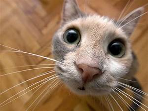 Funny Cat Screensavers - Impremedia.net