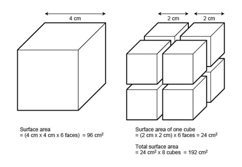 Opinions On Surface Area