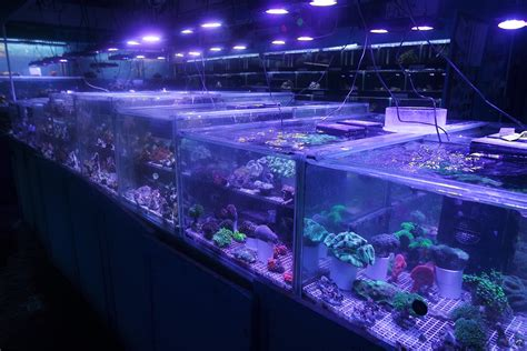 aquatic shop for aquariums fish tanks marine tropical freshwater coral frags