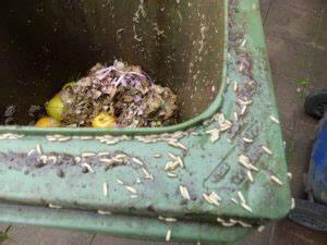 Maden Im Müll : was hilft gegen maden in der m lltonne die netz lupe ~ Markanthonyermac.com Haus und Dekorationen