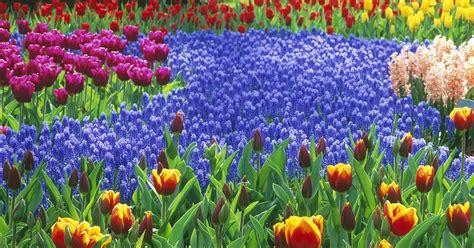 Starting A Flower Garden theonlineflowergarden 5 simple steps to start a