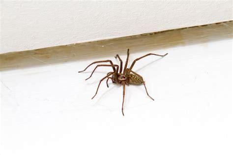 5 astuces pour chasser les araign 233 es