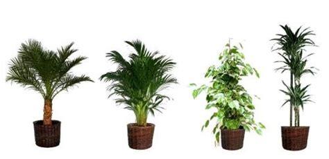 plante depolluantes d interieur l atelier des fleurs
