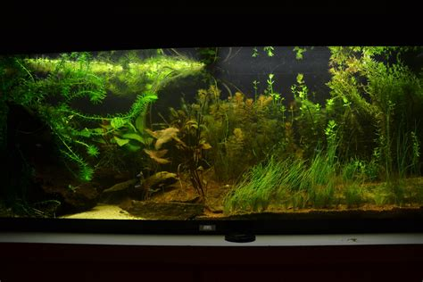 bac d 233 butant juwel 240 litres conseils plantes et poissons