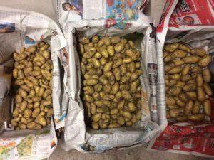 Kartoffeln Und Zwiebeln Lagern : ernte und lagerung der kartoffeln annabelle gourmetbauer ~ Markanthonyermac.com Haus und Dekorationen