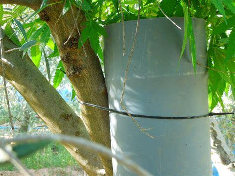 comment cultiver discr 232 tement du cannabis en ext 233 rieur du growshop alchimia
