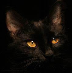 1000+ ideas about Amber Eyes on Pinterest | Eyes, Rare Eye ...
