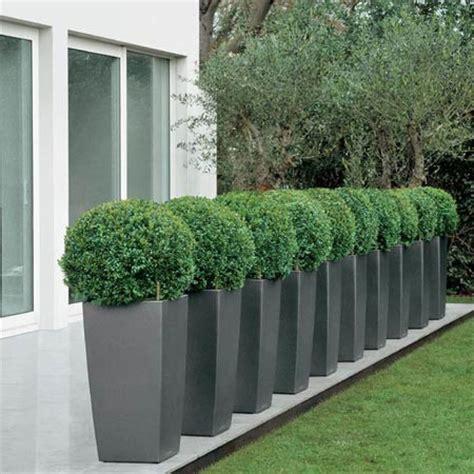 jardins bleus buis boule 40 45 cm rempot 233 dans un pot lechuza cubico anthracite