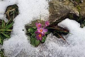 Garten Was Tun Im März : vorfr hling was bis ende m rz im garten zu tun ist ~ Markanthonyermac.com Haus und Dekorationen