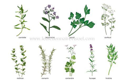 alimentation et cuisine gt alimentation gt fines herbes image dictionnaire visuel