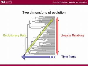 Estimation of divergence times