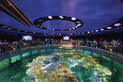dive at two aquariums by cambridge seven associates architectural lighting magazine
