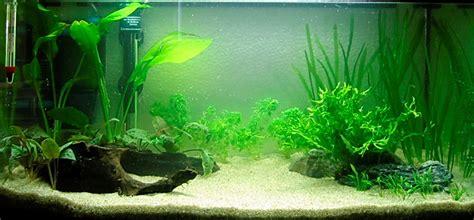 comment r 233 aliser un paysage aquascape avec un aquarium 54