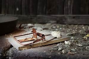 Mäuse Fangen Ohne Falle : wo mausefalle aufstellen ort f r bestes fangergebnis ~ Markanthonyermac.com Haus und Dekorationen