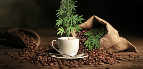 Cannabis Infused Coffee ? Consumers Grow Wise to Health Benefits of Marijuana