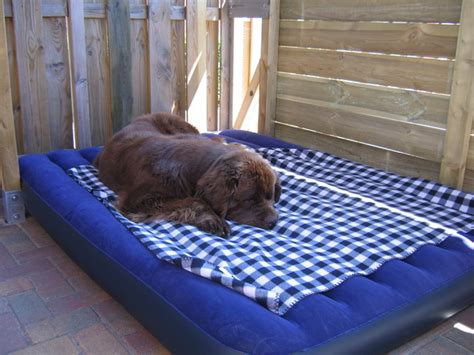 Luchtbed Hond by Duitse Dog Mand Of Matras Hondenforum
