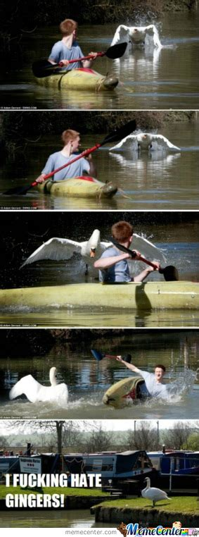 Swan Boats Videos by Swan Vs Boat By Liamotee11 Meme Center