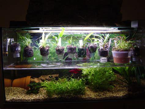home fish decor petco acetabularia betta aquarium plant images frompo
