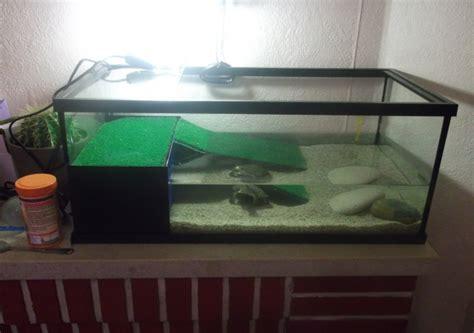 laquelle choisir identification et maintenance des tortues aquatiques