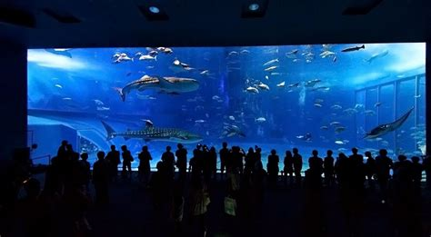 le plus grand aquarium du monde