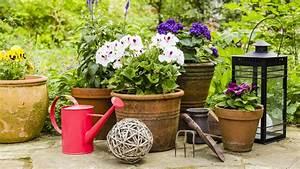 Tragehilfe Für Kübelpflanzen : so werden k belpflanzen fit f r den fr hling ratgeber garten ~ Markanthonyermac.com Haus und Dekorationen
