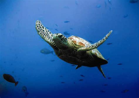 week end culturel montevrain avec 1 entr 233 e 224 l aquarium sealife pour 2 adultes 224 partir de 113