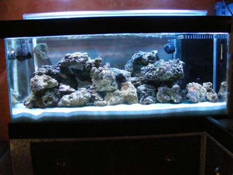 d 233 coration aquarium recifal occasion metz 12 aquarium