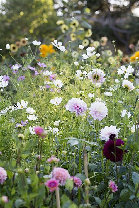 Starting A Flower Garden best 20 cut flower garden ideas on