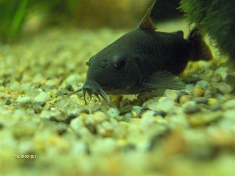 concours photo poissons de fond