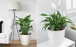 Pflanzen Die Wenig Licht Brauchen Heißen : wohnzimmerambiente durch pflanzen aufwerten ~ Markanthonyermac.com Haus und Dekorationen